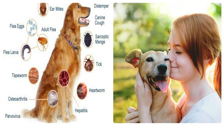 What Are the Diseases Your Pet Can Give You?