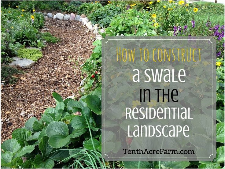 Capturing water in the landscape is often the easiest and most efficient way to store it. Swales help us do that. Learn how to choose the best site for a swale and how to build one.