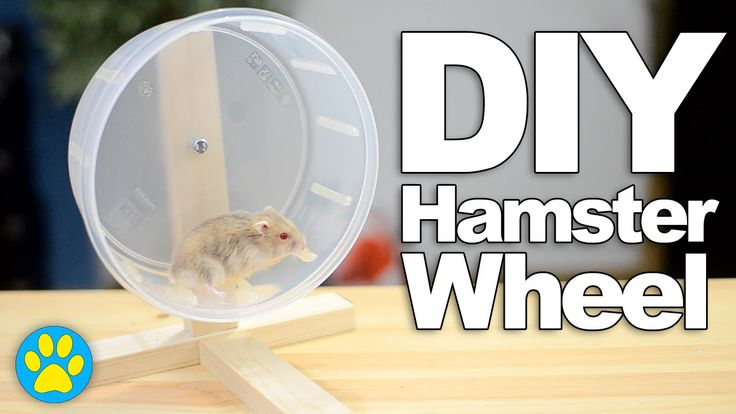DIY Hamster Wheel   #DIYJuly