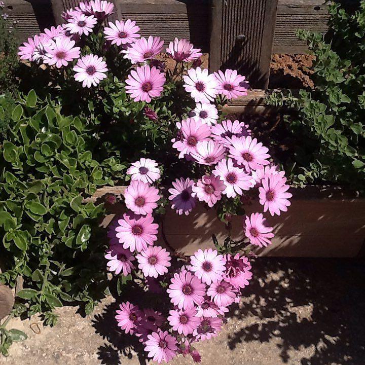I beg your pardon I never promised you a rose garden  Happy Friday! #flowerstagram #garden #tgif