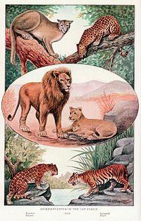 Snorre fortæller i Heimskringla, at Freja ofte kører i en vogn trukket af store katte; fx ankommer hun i den til Balders begravelse.  Senere folklore tyder på, at det har været en mere udbredt forestilling; fx refererer Jakob Grimm til en tradition om at en brud sørger godt for katten inden hun tager til sit bryllup for ikke at fornærme kærlighedsgudinden. https://da.wikipedia.org/wiki/Kattefamilien