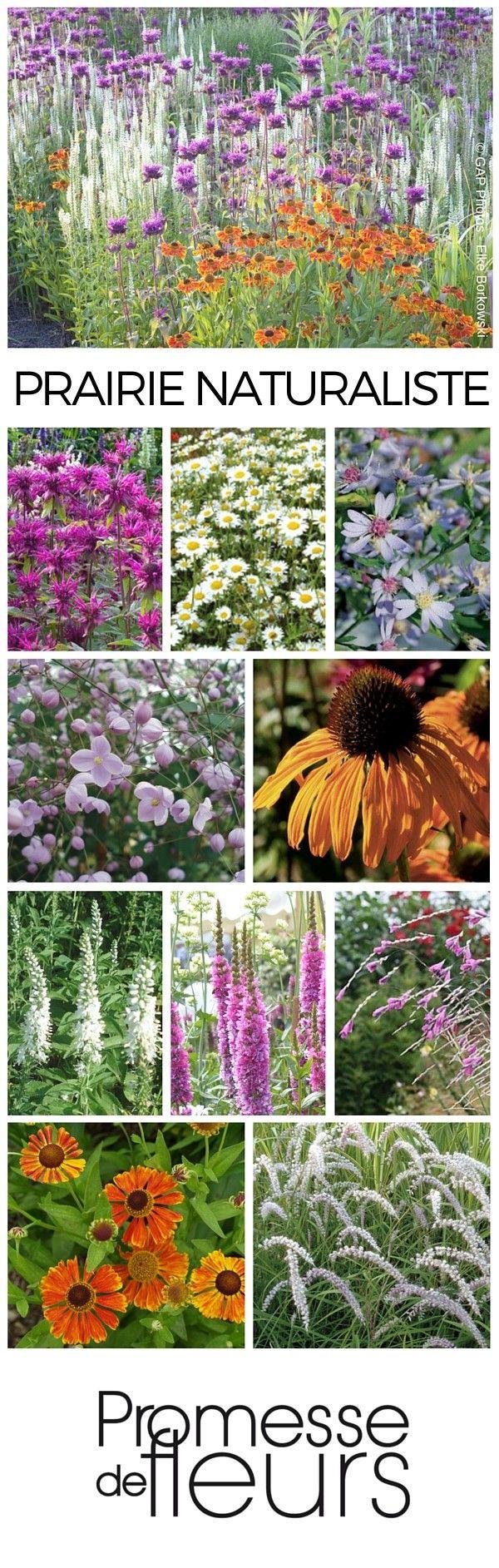 883 best images about garden paths on pinterest shade garden - Cette Prairie Naturaliste Est Inspir E Des Prairies Sauvages Humides Ce Type Prairie Gardenlandscaping
