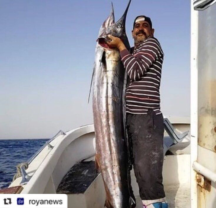 اصطياد سمكة الفرس الطافح بخليج العقبة رؤيا الاخباري الأردن Fish Dishes Fish Dishes