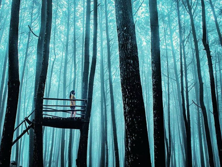 hutan pinus imogiri yang instagramable
