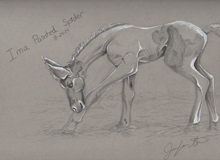 """Day 5 of the 21-Day Drawing Challenge. """"Refinement drawing"""". I chose a horse named Ima Painted Spider. #draw21days"""