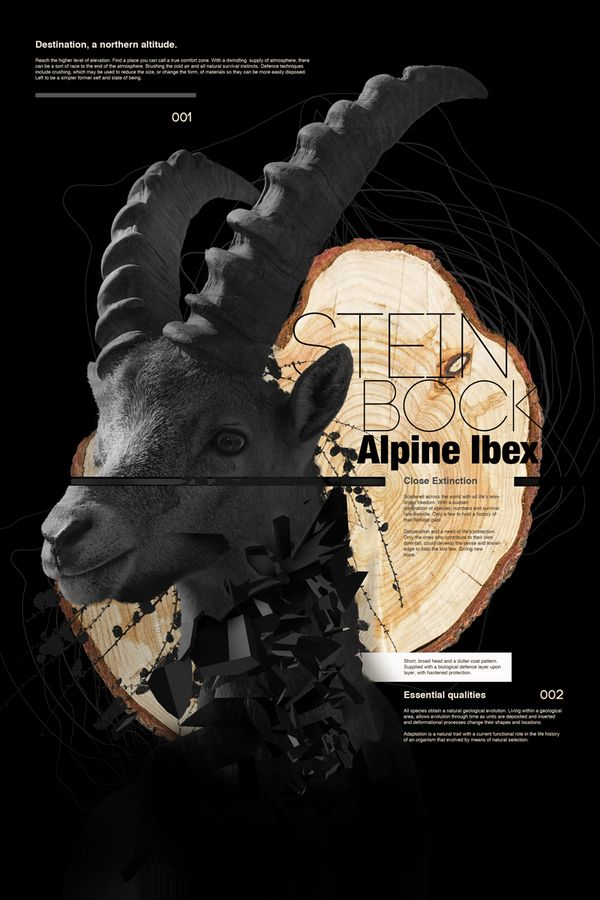 African Weekly Inspiration: Bovine Series, Aldo Pulella