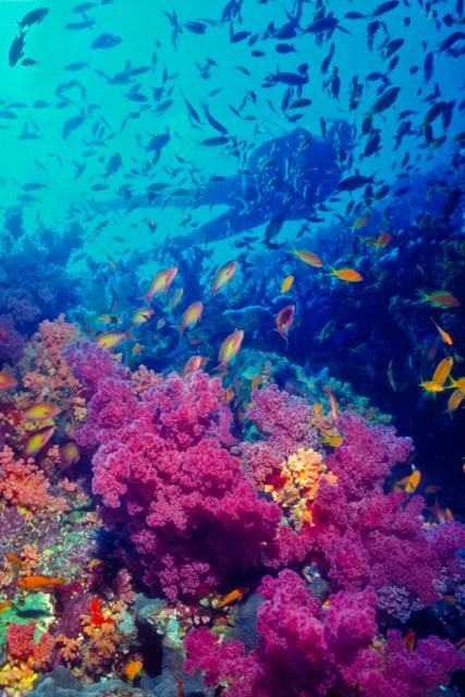 Diving in the Red Sea.   ❤ Sharm El Sheikh, In the Sinai.