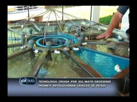 120213  Tecnologia promete revolucionar a criação de peixe aumentando a ...