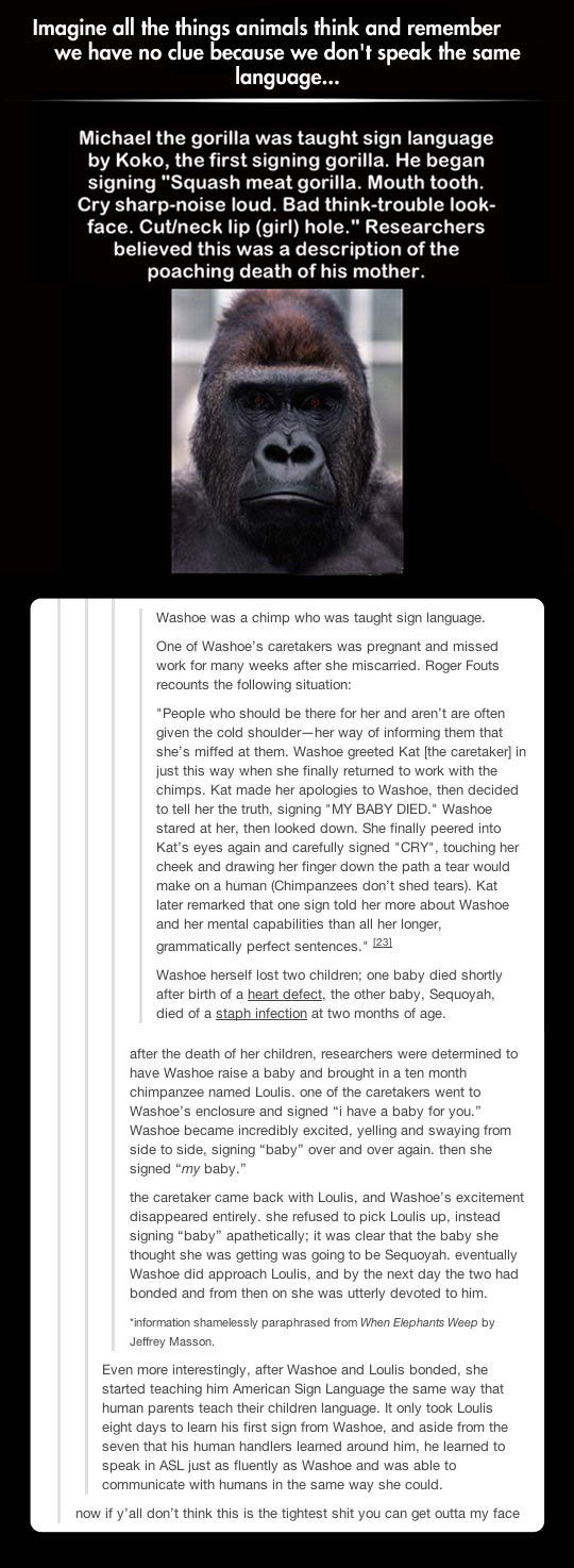 This is why I get furious when people say animals are dumb. Just because they can't speak in a way we understand doesn't mean they are less then what we are.