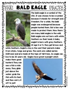 Informational text about the bald eagle…short and sweet - perfect for First Grade and Kindergarten students. $