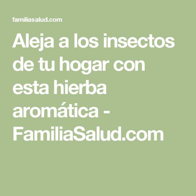 Aleja a los insectos de tu hogar con esta hierba aromática - FamiliaSalud.com