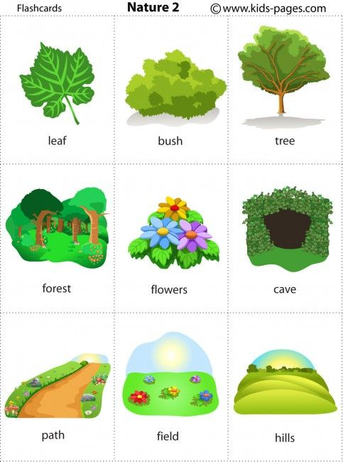 Nature 2 flashcard