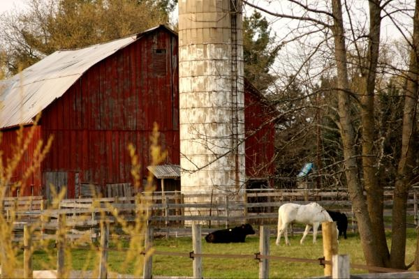 426 Best Images About Old Barns Cattle And Horses On
