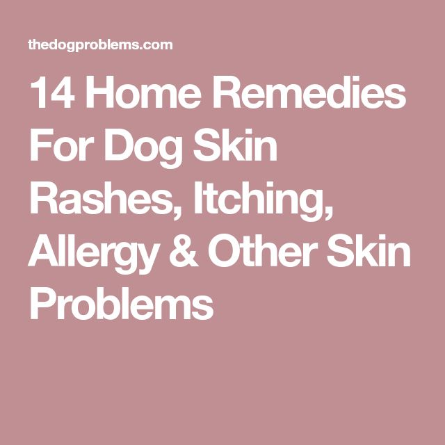 14 Home Remedies For Dog Skin Rashes, Itching, Allergy & Other Skin Problems
