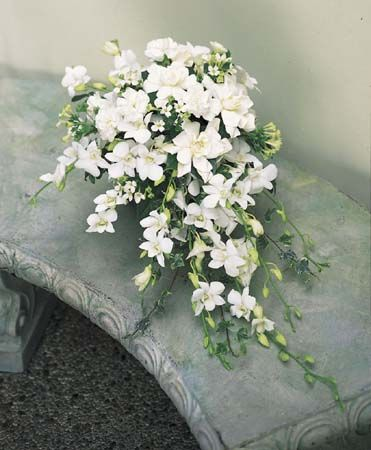 lavish bouquet filled with white dendrobium orchids, gardenias, white bouvardia, white mini carnations and variegated ivy.