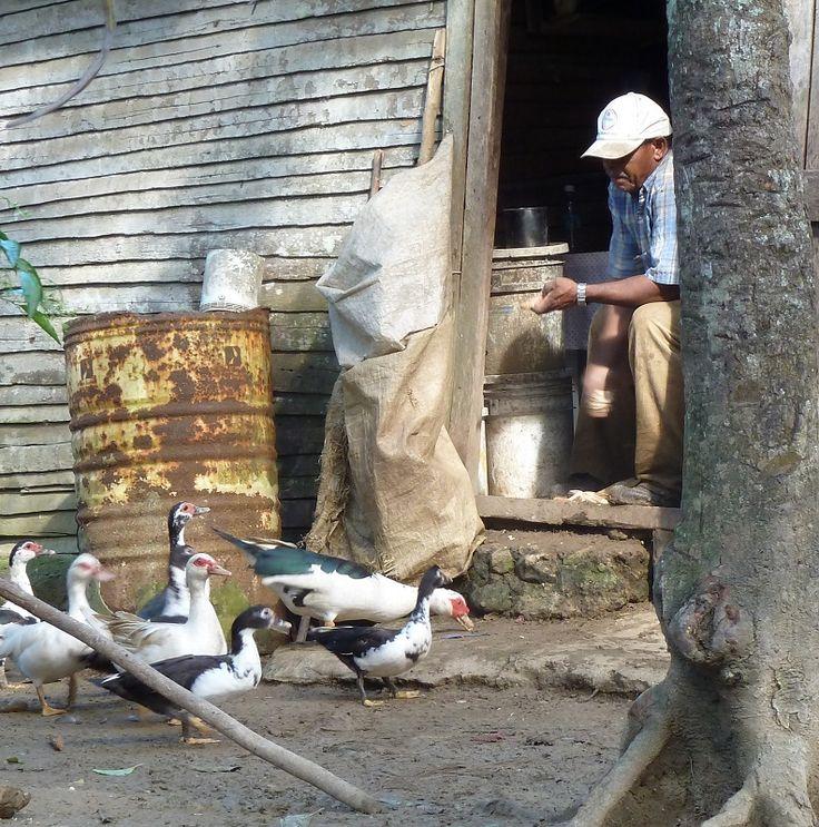 Der alte Mann und die Enten