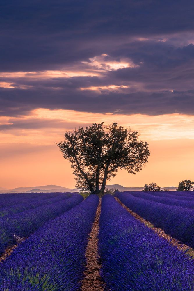 Valensole II by Zephyrea Pics on 500px