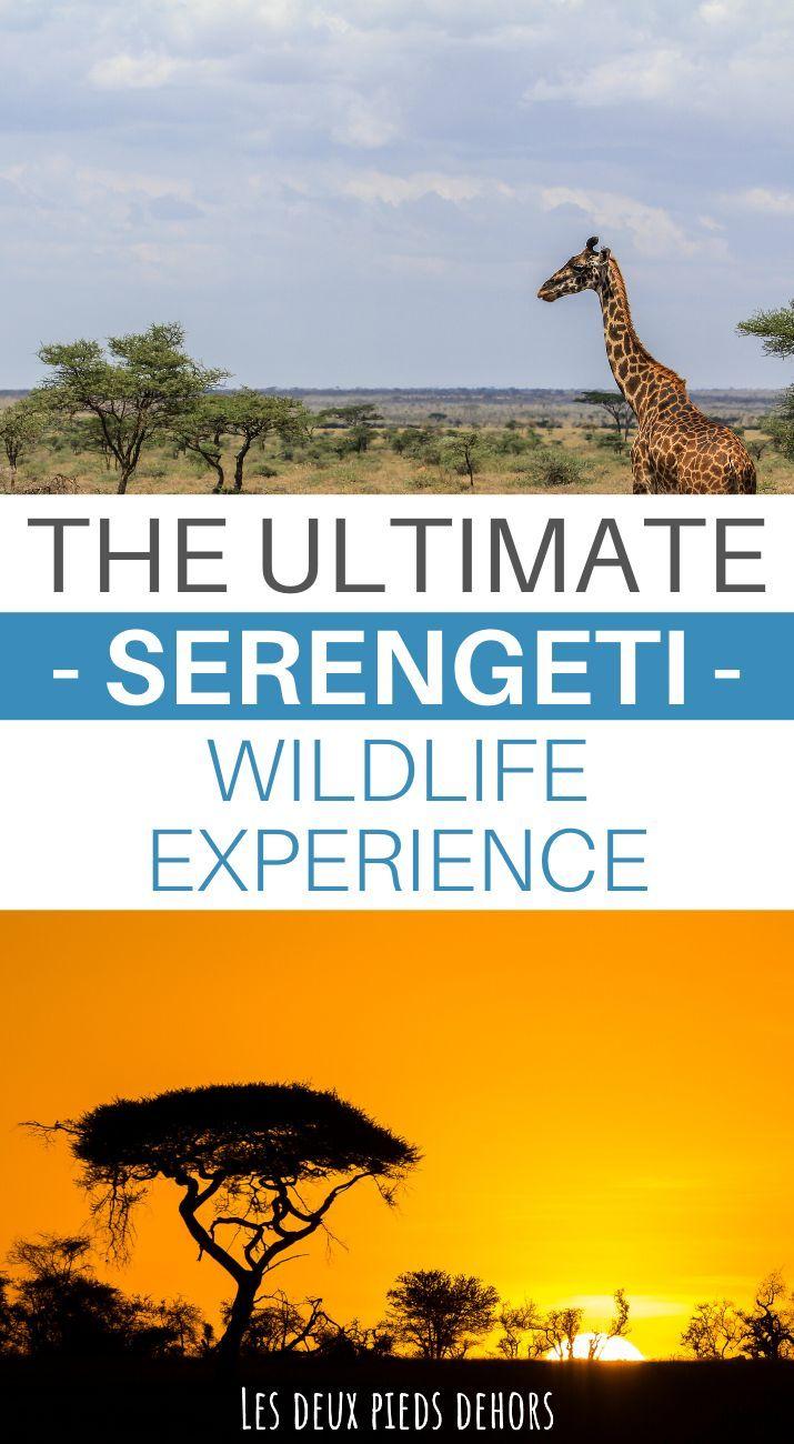 Safari In The Serengeti National Park A Wonderful Place To Explore Tanzania Travel Africa Travel Beautiful Places Africa Travel