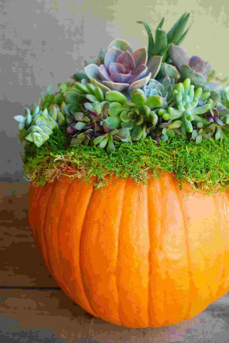 Pour fêter Halloween, créez une composition végétale sur l'une de vos citrouilles, et peaufinez l'ensemble avec des pommes de pin, glands et brindilles.