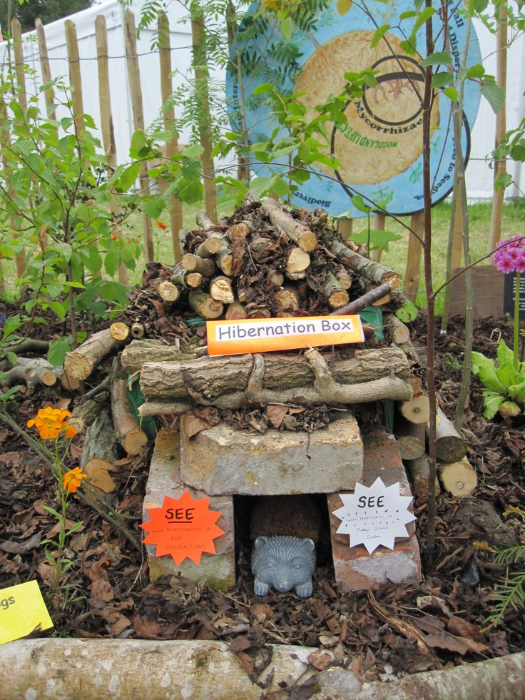 Hedgehog habitat From the outdoor classroom at Bloom 2013