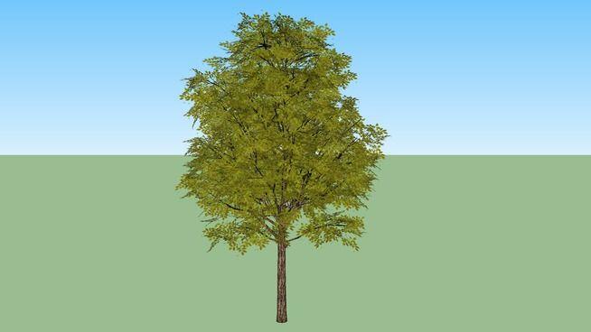 tree - arbol frondoso - 3D Warehouse