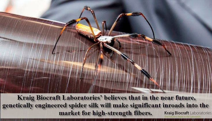 Best 25 spider silk ideas on pinterest electron for What do we use silk for