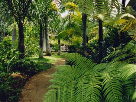 Google Image Result For Http://www.kauai Vacation Rental . Tropical  LandscapingLandscaping ...
