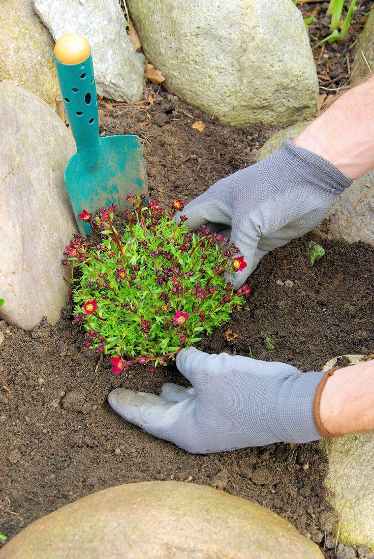 25+ Best Ideas About Steinbeet On Pinterest | Steingarten ... Pflanzen Fur Steingarten Tipps Auswahl Pflege