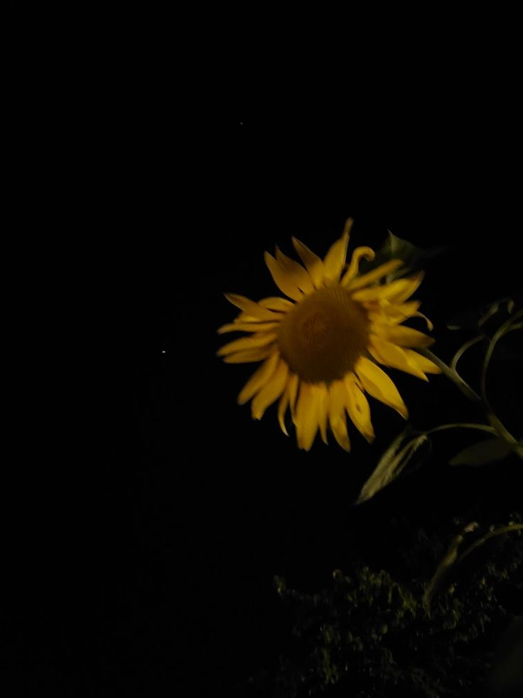 Sunflower at night ( see the little star on the left ...