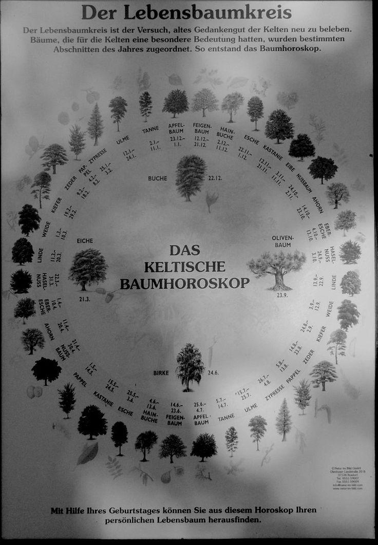 Lebensbaumkreis - Keltisches Baumhoroskop – Wikipedia