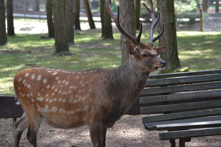 Tier- und Freizeitpark Germendorf in Germendorf, Brandenburg