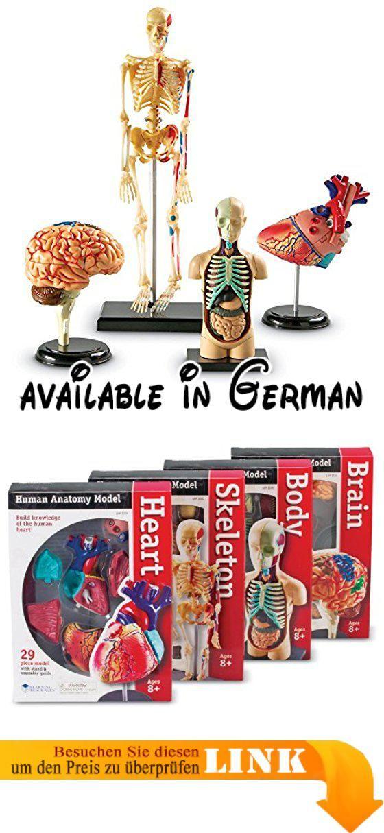 B0012WF7LW : Learning Resources Anatomy Model Set. Lehrt Kinder ...