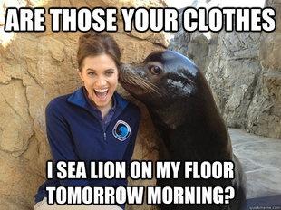Sea Lion Meme   Slapcaption.com