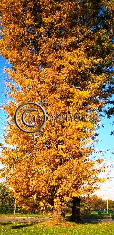 Foliage, i colori d'autunno – Nicola Noe