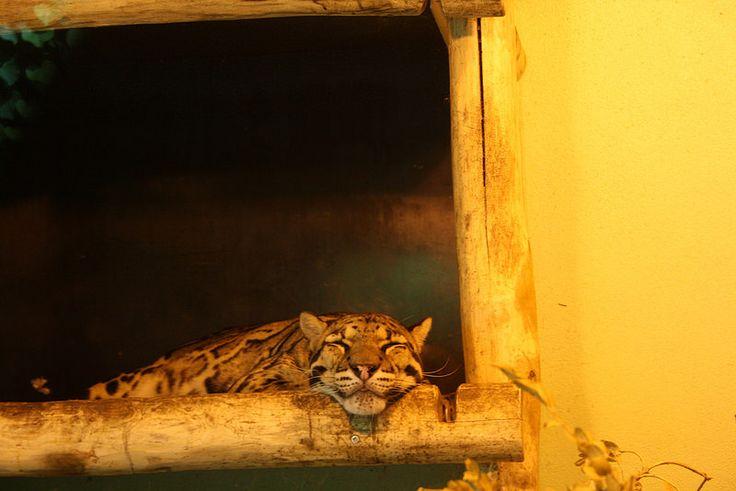 Saksan reissu osa 2: Dortmund Zoo