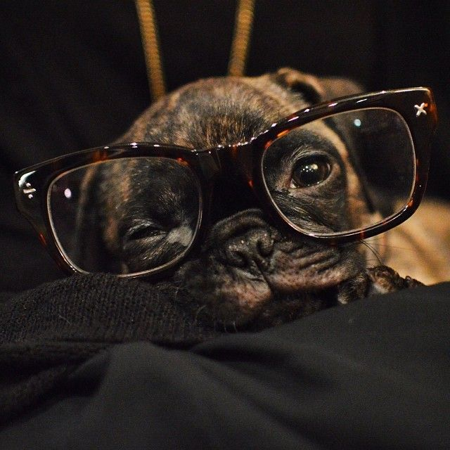 "Too cute! ""shaughnessy keely"" posted the cutest pup in some rocking tortoise shell Derek Cardigans."