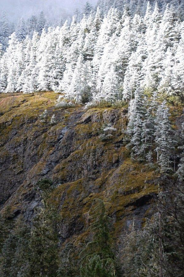 La ligne de neige commence à glisser vers le bas pour les altitudes inférieures sur la péninsule Olympique.