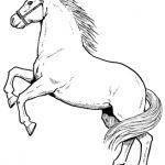 Schöne Ausmalbilder Pferde
