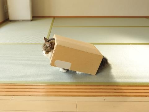 """""""Cats are cute.  Cats in boxes are even cuter.  Cats are aware of this and make the most of it."""" --Anonymous"""