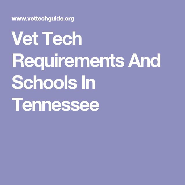 Vet Tech Requirements And Schools In Tennessee