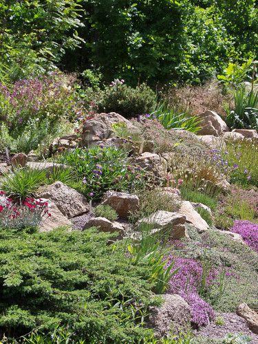 Blühender Steingarten