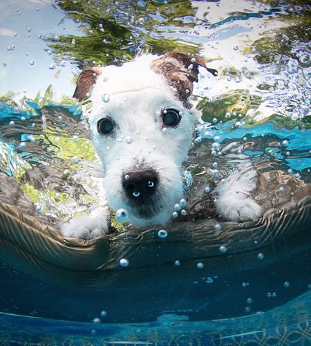hello there doggy :-) what a cute dog in the pool ... love dogs! http://www.dogscircle.com