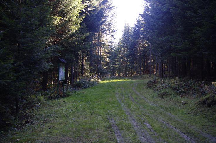 #biegowkiwbieszczadach #biegowki #ustjanowa #ustrzykidolne #trasybiegowe #crosscountryskiing #nordicski #bieszczady #jesień #autumn #las #nordicwalking