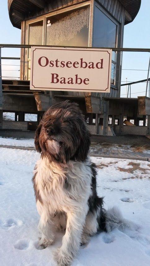 Haus Meeresblick - Urlaub mit Hund auf Rügen