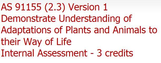 rewa net link http://rewanet.manurewa.school.nz/WebSpace/7787/