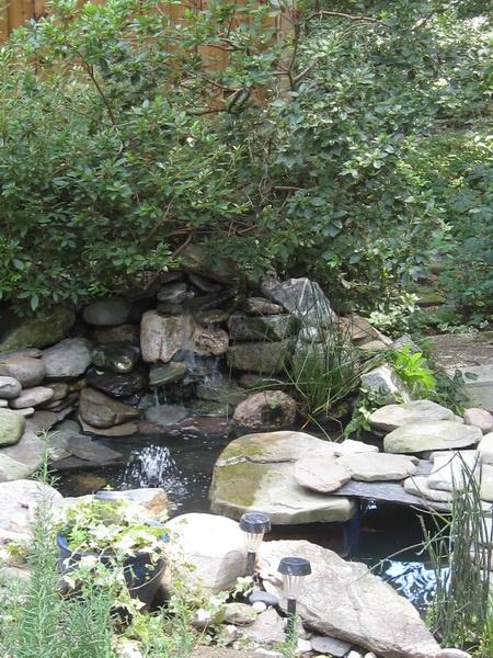 Backyard fish pond.