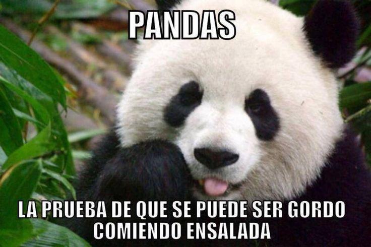 Pandas! La prueba de que se puede ser gordo comiendo ensaladas