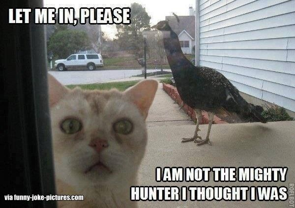 Funny Cat Peacock Meme Joke Picture Image ...........click here to find out more…