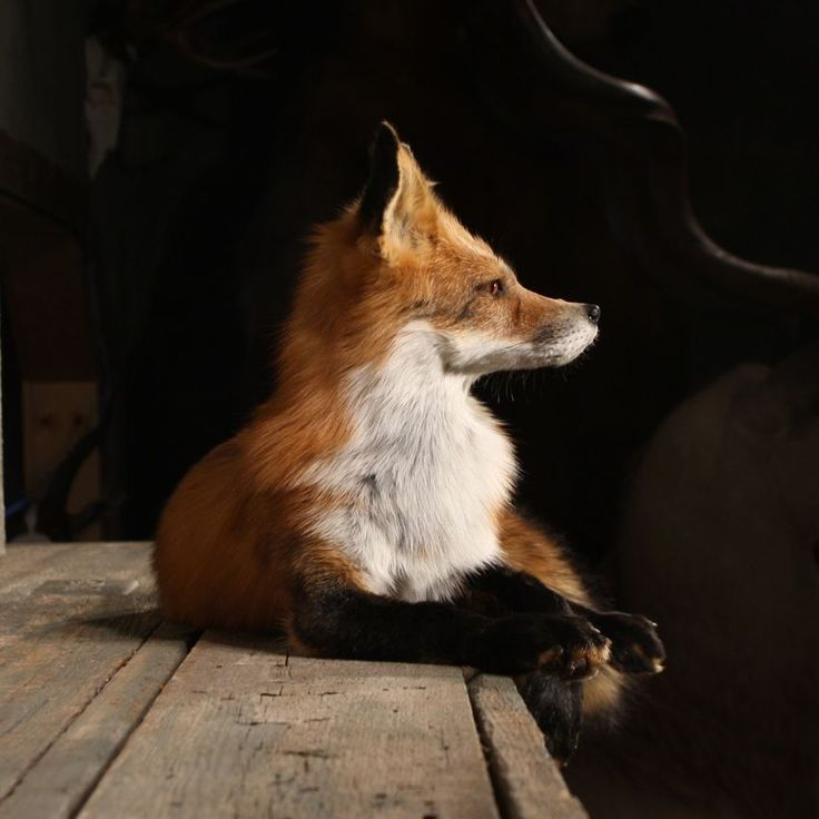 taxidermy: the beauty of nature, frozen in time.