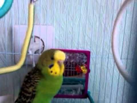 Speaking parrot